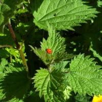 Nettles revisited: how time removes the sting