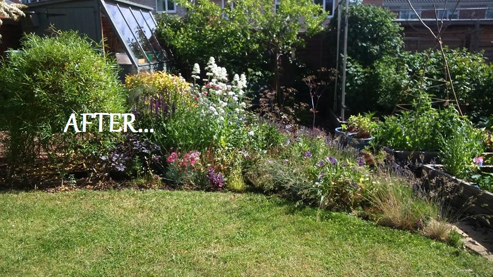 My Hard-Working Garden: An Ongoing Transformation (Part 2) – Dogwooddays