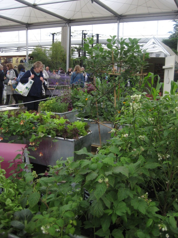 Exciting Crops To Grow In A Modern Kitchen Garden Dogwooddays