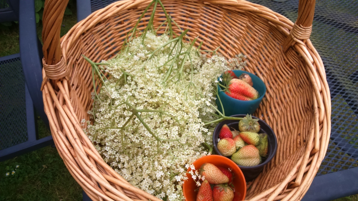 A Taste of Summer: Elderflower Cordial Recipe