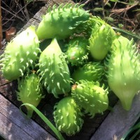 Allotment 96B: The Unusual, the Innovative and the Just Plain Weird...