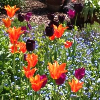 Banish the September blues with my top 10 tulips
