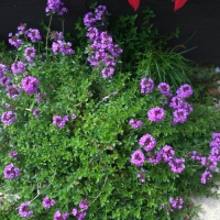 6 Ways to Create an Ornamental and Productive Garden