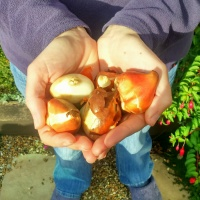 Planning a Cutting Patch: Bulb Time