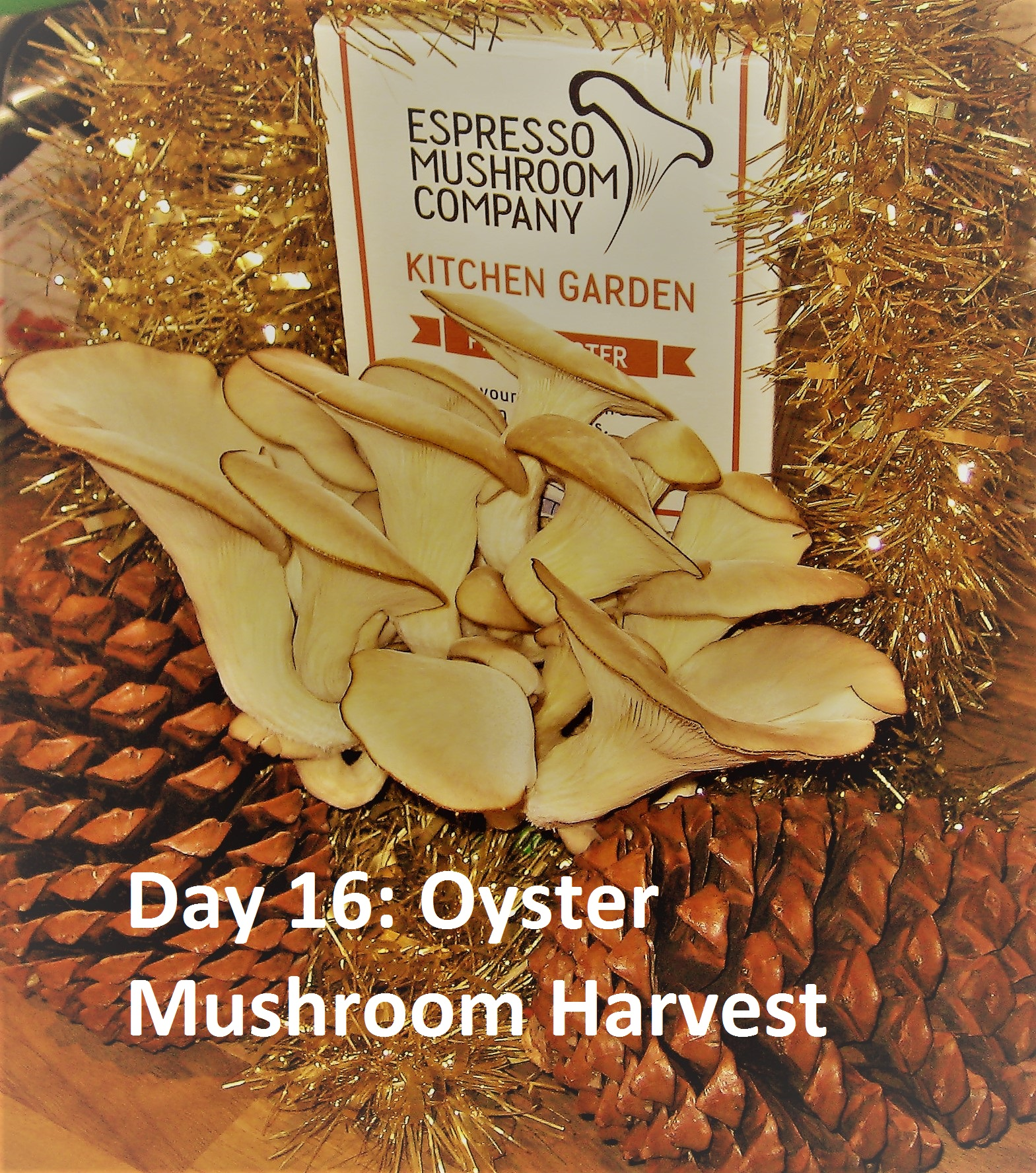 Kitchen Garden Mushrooms Christmas Dogwooddays