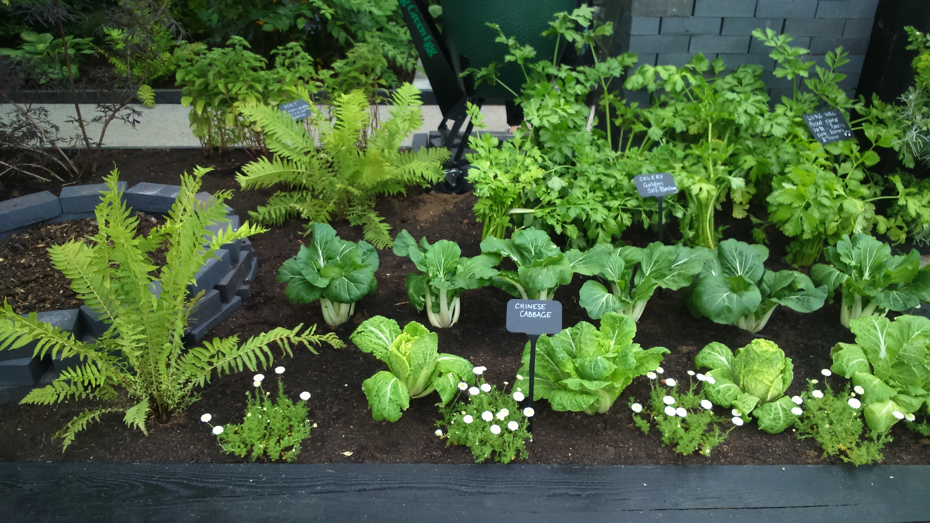 Practical Ways To Create A Modern Kitchen Garden Dogwooddays