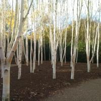 Creating A Winter Garden (Part 2)