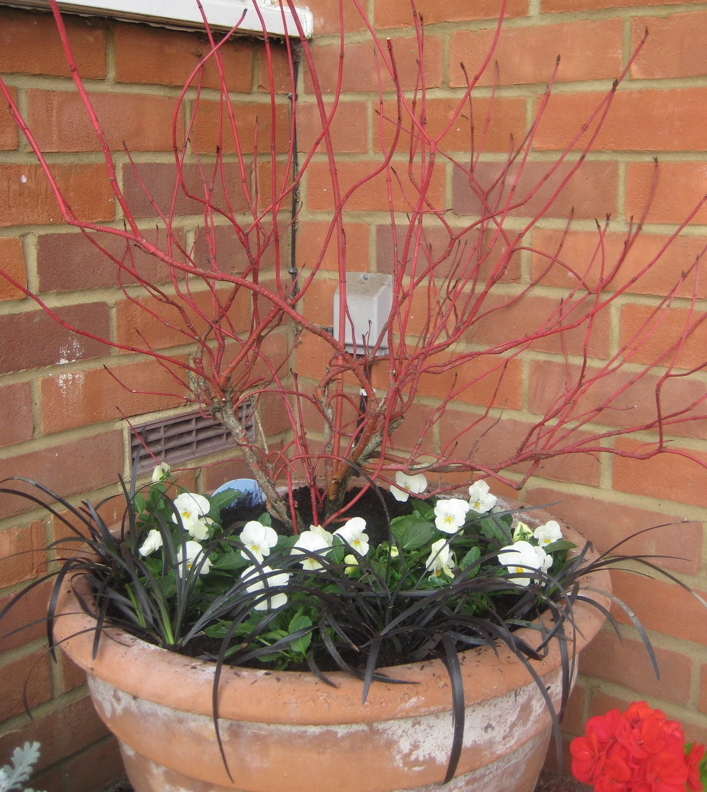 Winter pot1