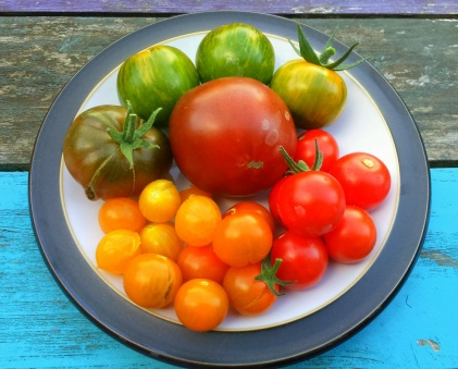 3 Top Tasting Tomatoes… – Dogwooddays