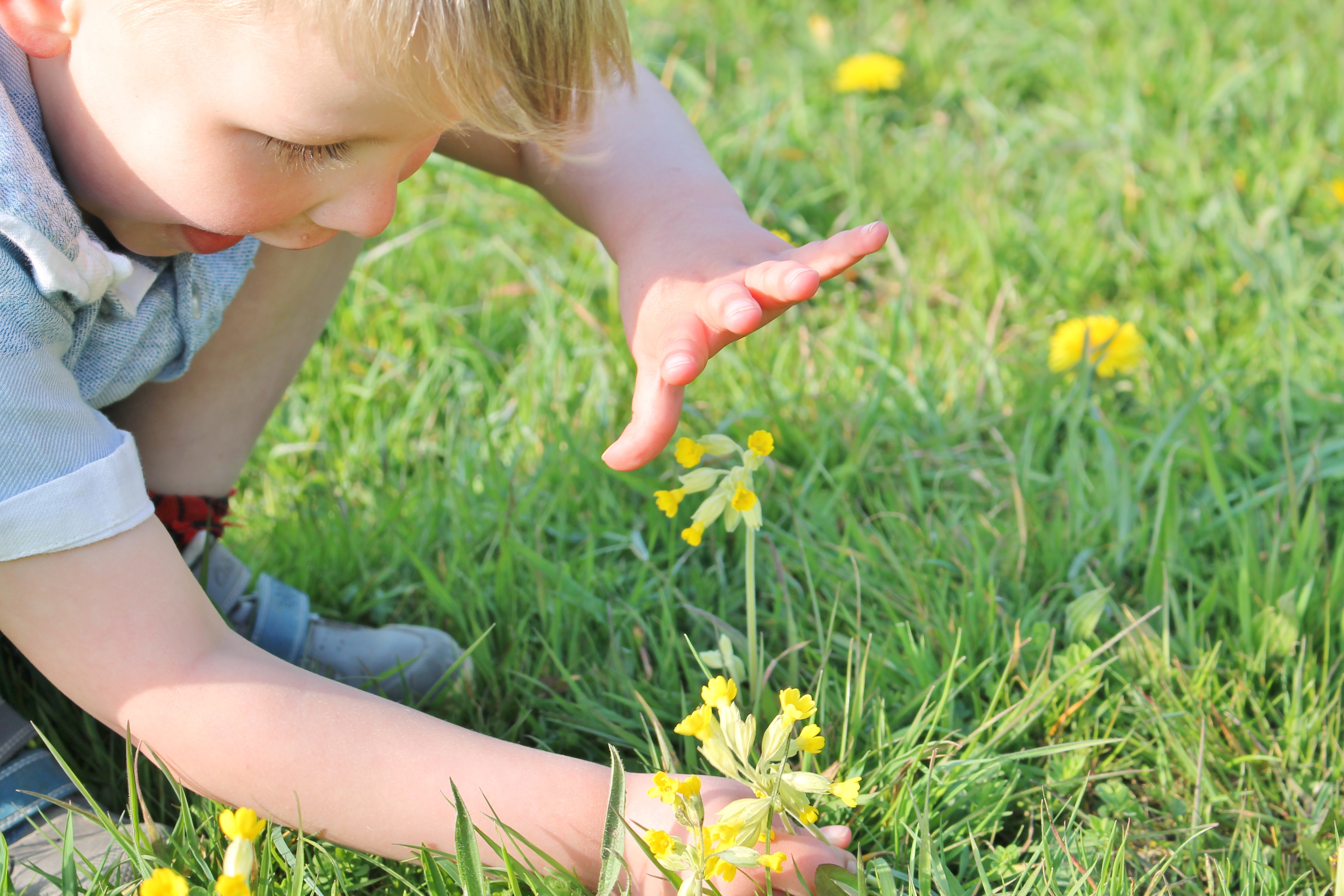 Boy and cowslips Plantlife Kim Newman.JPG