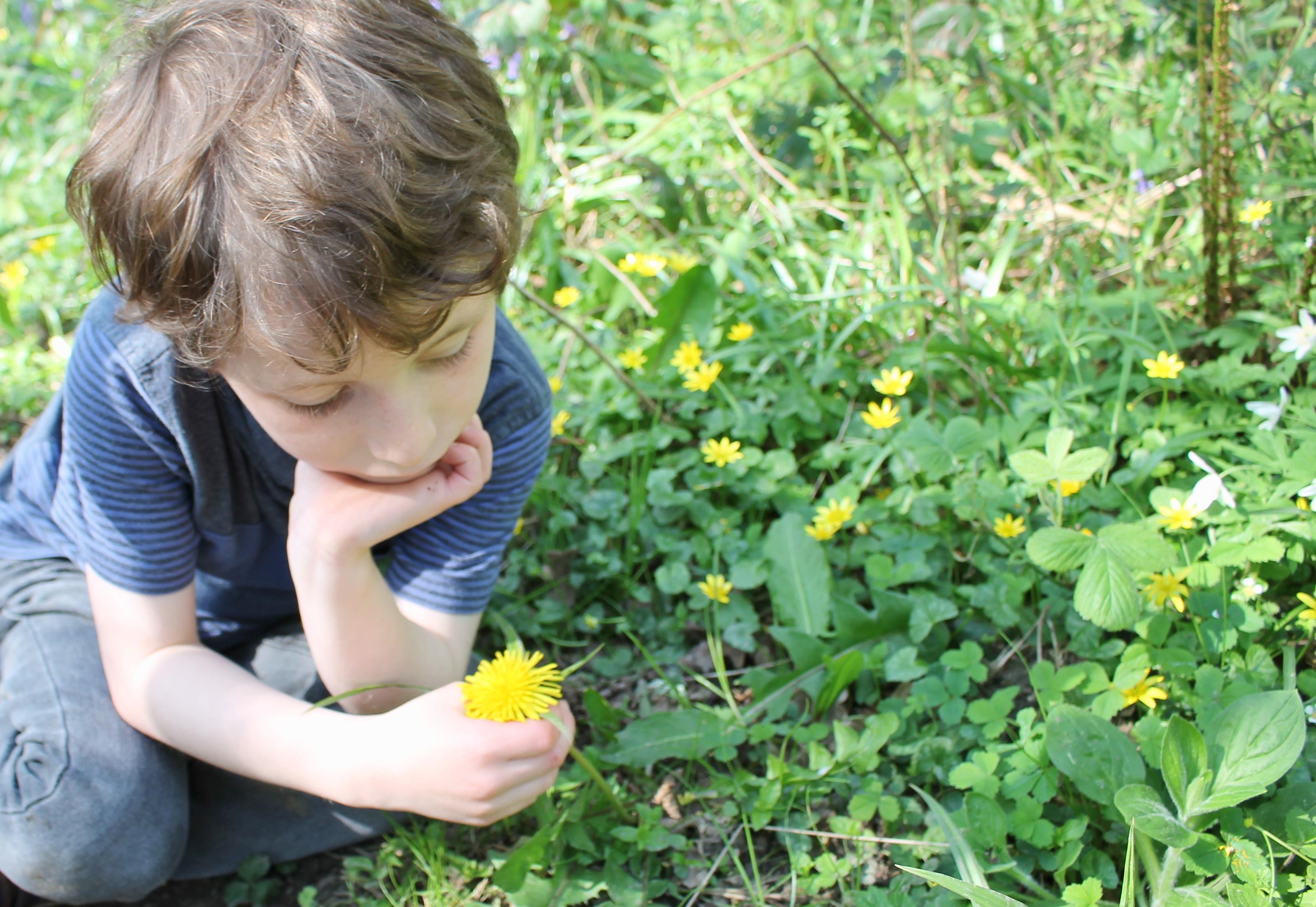 Boy dandelion celandines Plantlife Kim Newman.JPG