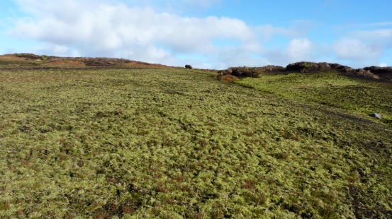 Re-vegetated Bare Peat.JPG
