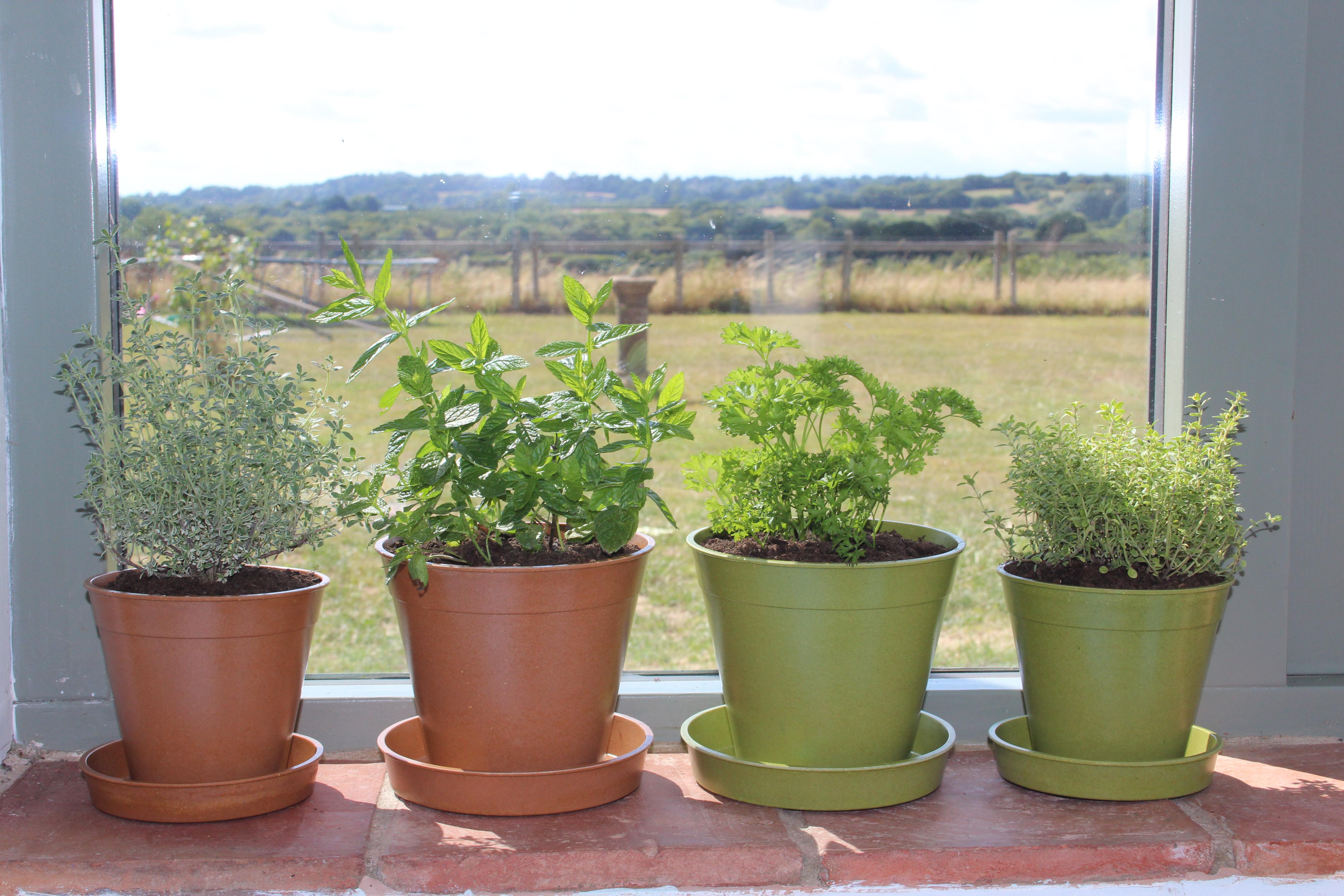 5in & 6in Sage & Terracotta Pots.JPG