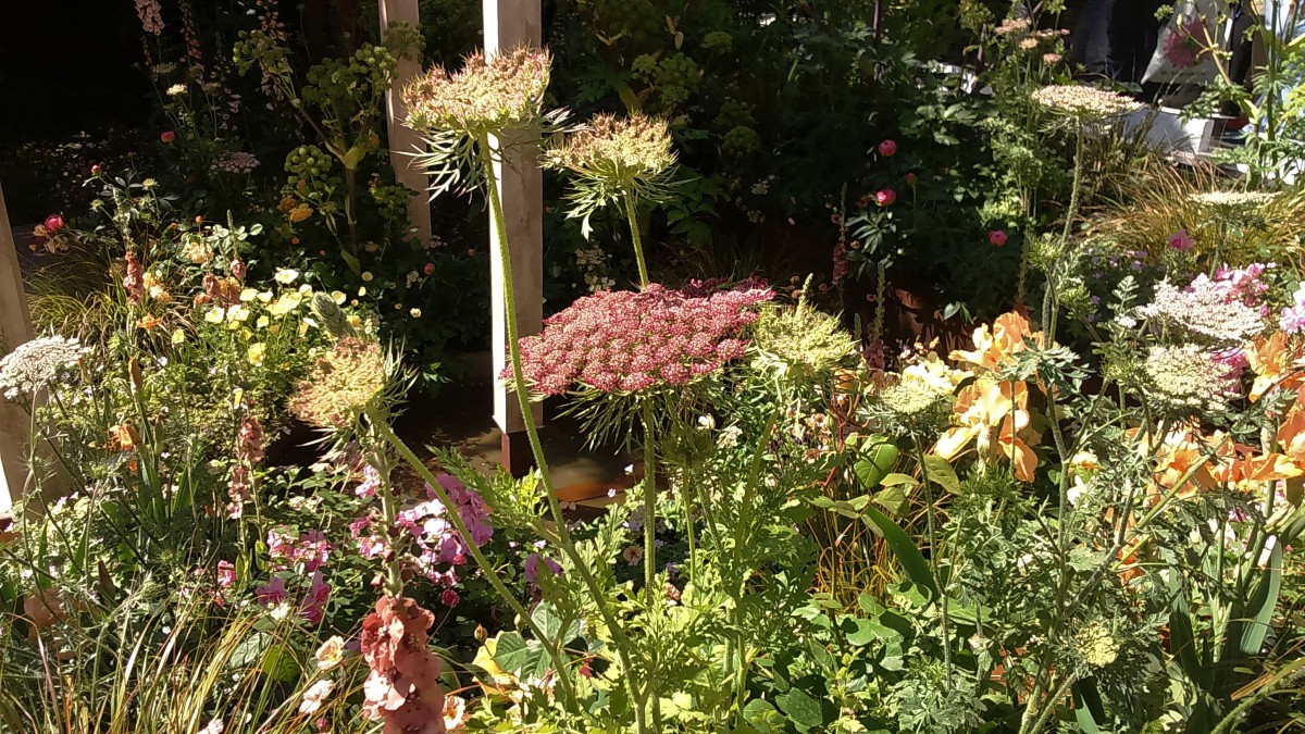 Coral, Peach and Ivory Tones in Jo Thompson's Wedgwood Garden