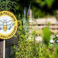 Pesticide-Free Plants with the Saving Pollinators Assurance Scheme